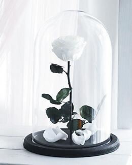 Mieganti roze po stiklu