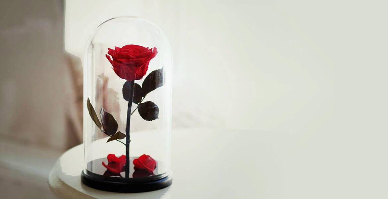 stabilizuotos rožes