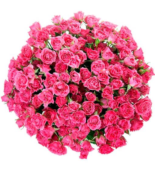 rozines krumines rozes foto 4