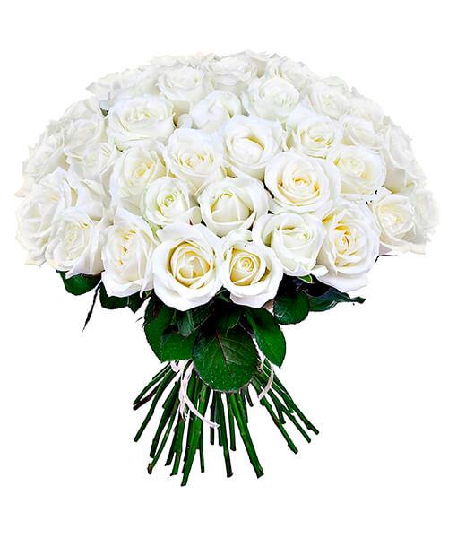 Baltu roziu puokste foto 5
