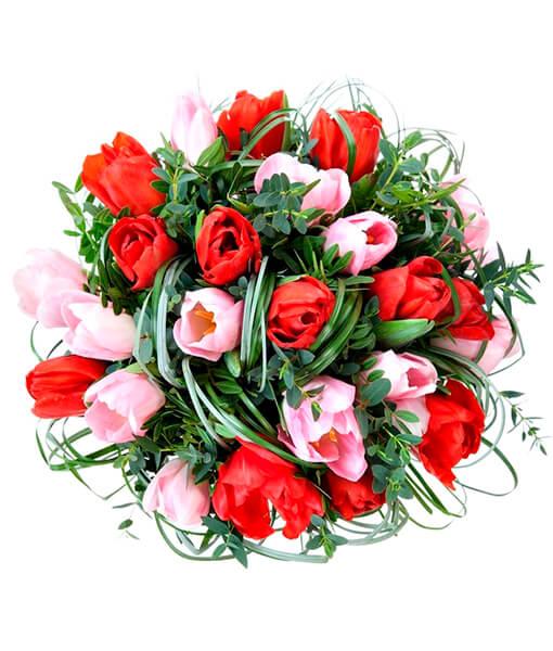 rausvos ir raudonos tulpes foto 4