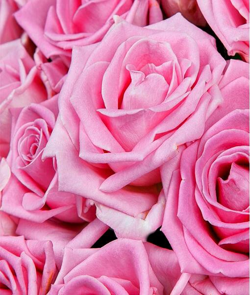 rožines rožes foto 3