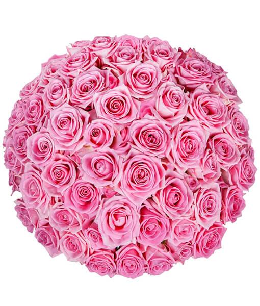 rožines rožes foto 4