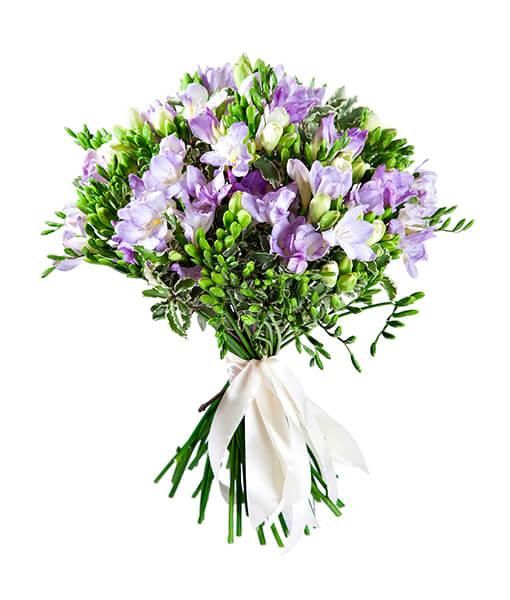 baltai violetines frezijos foto 1