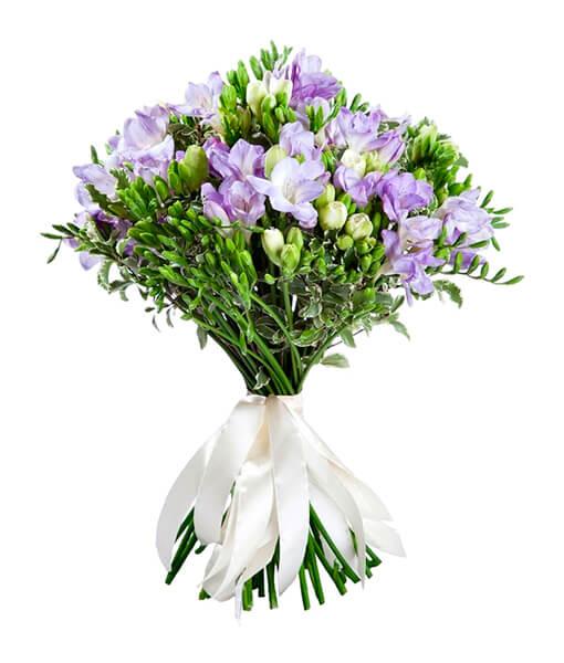 baltai violetines frezijos foto 2