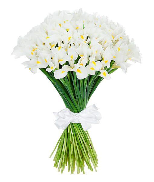 Baltų Irisų puokšte