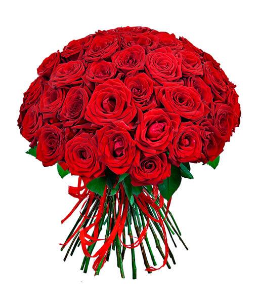 raudonu roziu puokste