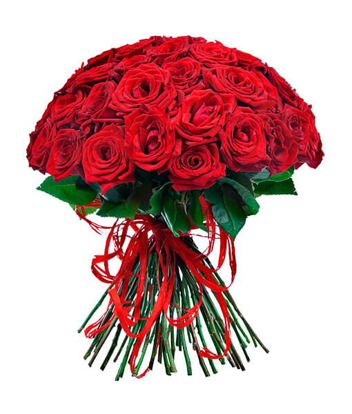 raudonos rozes