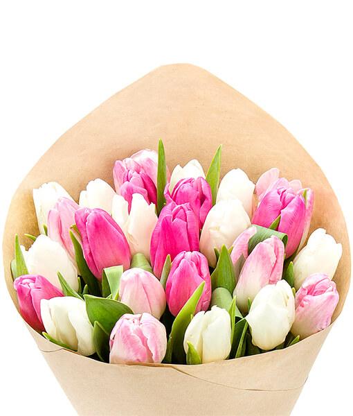 baltos rozines tulpes foto 1