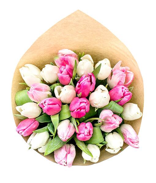 baltos rozines tulpes