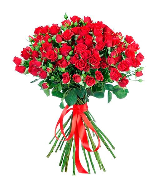 Raudonos krumines rozes foto 2