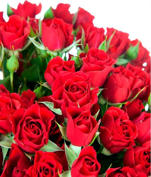 Raudonos krumines rozes foto 3