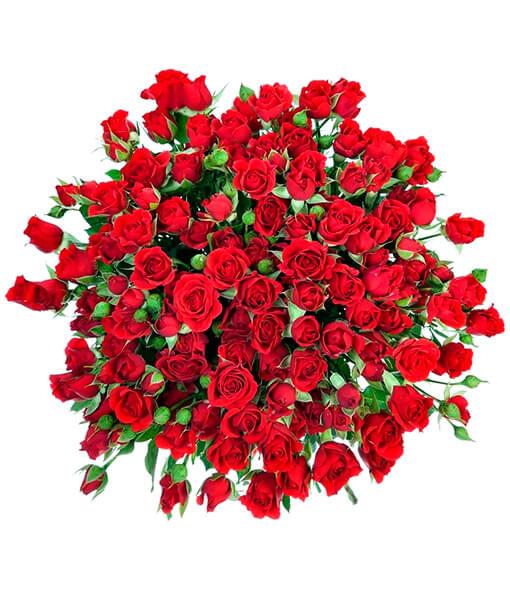 Raudonos krumines rozes foto 4