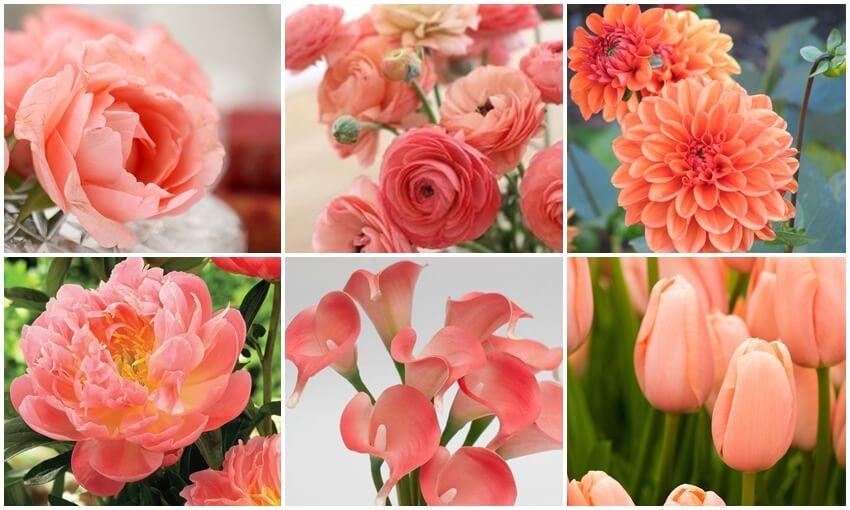 Koralinės spalvos gėlės