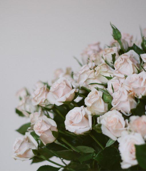 Kreminės krūminės rožės